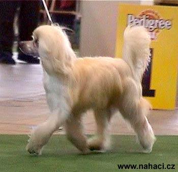 stránky chinese psí styl